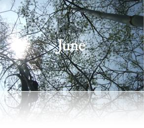 6月セミナー